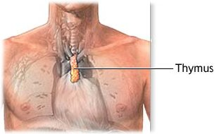 thymus-gland-surgery